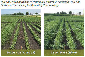 Soybean field treasted with DuPont Envive herbicide fb Roundup PowerMAX herbicide + DuPont FeXapan� herbicide plus VaporGrip� Technology