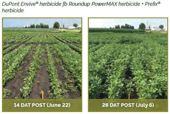 Soybean field treasted with DuPont Envive� herbicide fb Roundup PowerMAX herbicide + Prefix� herbicide