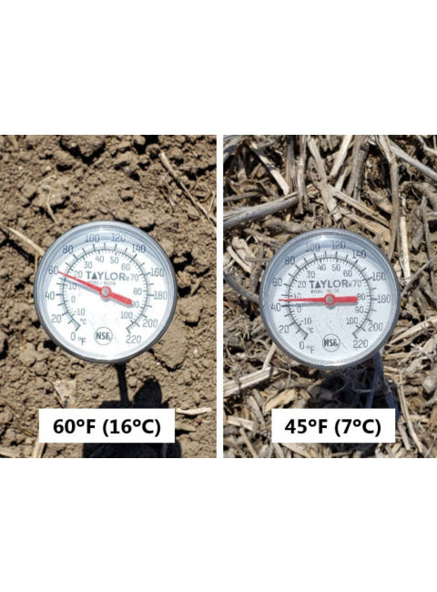 Photo showing temperature difference between soil under no residue and soil under heavy residue, midday, mid-April 2019.