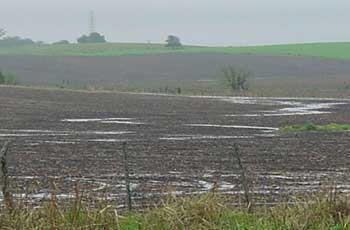 Delayed planting due to wet spring weather can cause growers to consider switching to an earlier maturity hybrid.