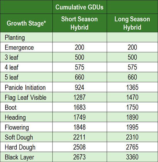 Cumulative GDUs for grain sorghum development.