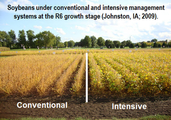Soybeans under conventional and intensive management systems at the R6 growth stage.