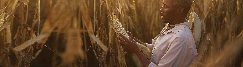 Farmer in field planting crop