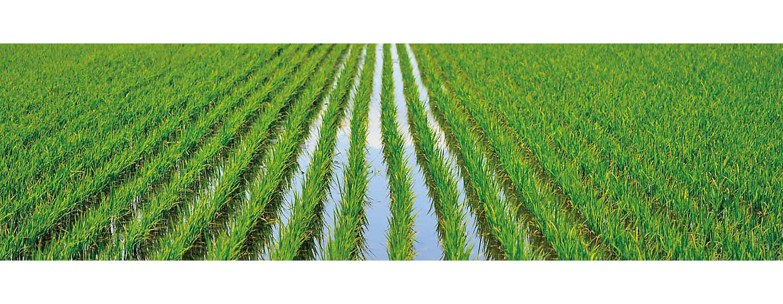 新規水稲用中後期除草剤 試験協力農家募集中