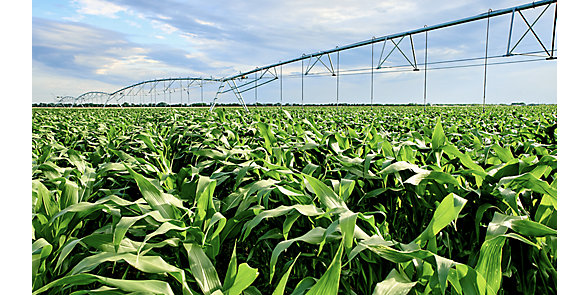 Maize Irrigation Image