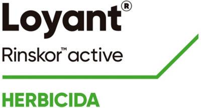 Logotipo Loyant Rinskor active