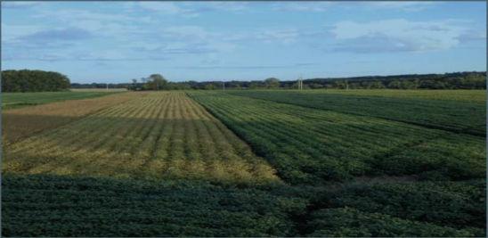 Soybean planting date trial near Westfield, Mass.