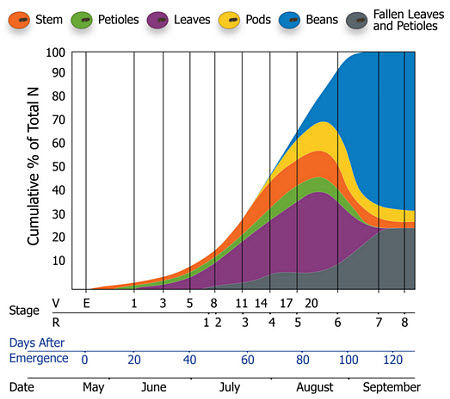 Nitrogen uptake of soybean by growth stage and date.