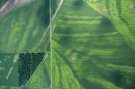 Aerial photograph showing nitrogen loss.