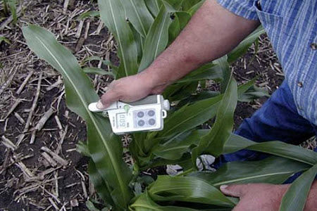 Chlorophyll meter being used to collect readings in corn.