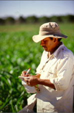 Taking notes on the grain sorghum material at the Puerto Vallarta winter nursery, Mexico.