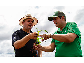 Dois homens conversando no meio de uma lavoura de milho e um deles segurando uma planta de milho.