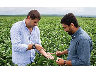 Dois homens no meio da lavoura de soja analisando a semente que está na mão de um deles.