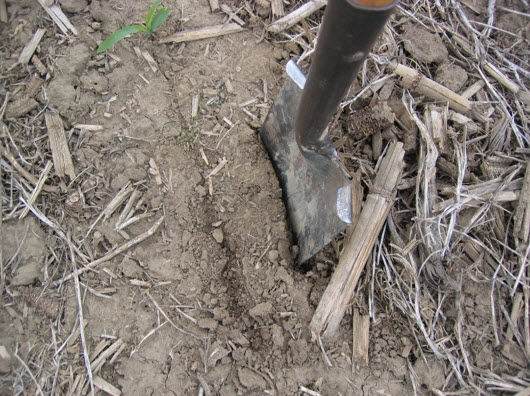 Closeup photo showing spade placement for digging a section of a seed furrow.
