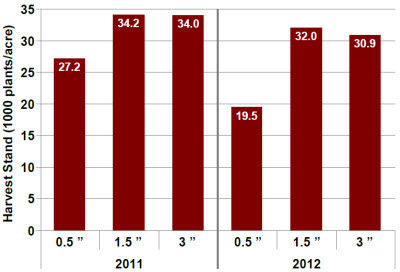 Harvest stand response to planting depth in 2011 and 2012.