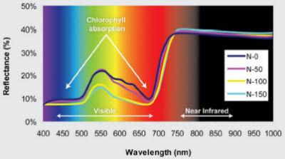 Reflectance spectrum for corn plants receiving 4 rates (0, 50, 100 and 150 lb/acre) of N fertilizer.