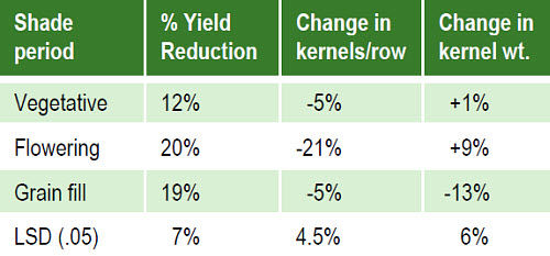 Effect of shade treatments on yield