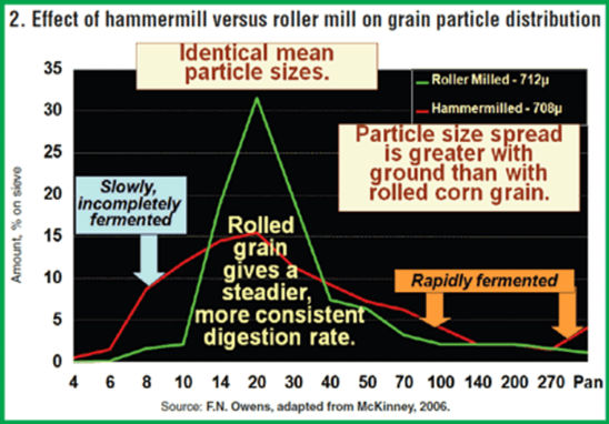 Effect of hammermill versus roller mill on grain particle distribution.