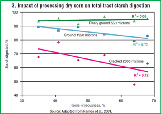 Impact of processing dry corn on total tract starch digestion.