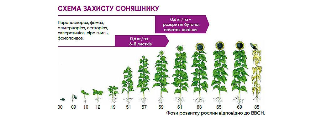 Схема захисту соняшнику