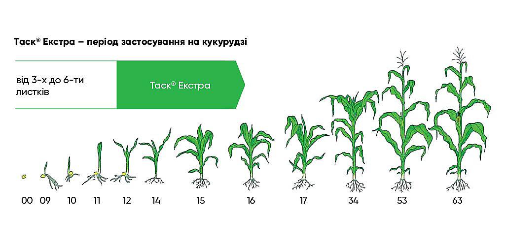 Таск® Екстра – період застосування на кукурудзі