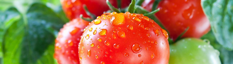 tomato late blight control