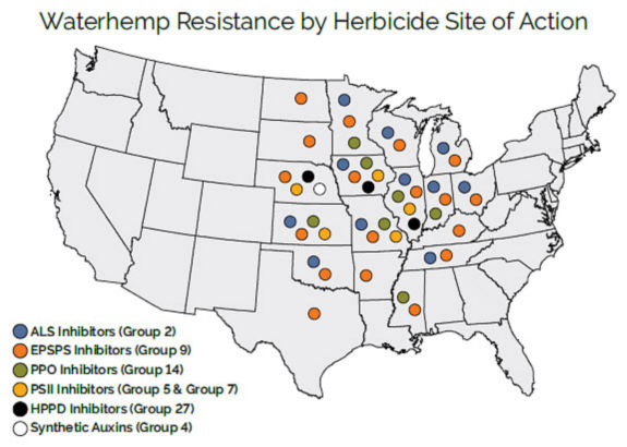 Waterhemp Resistance by Herbicide Site of Action