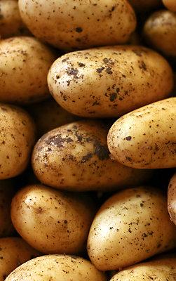 zorvec potato webtours