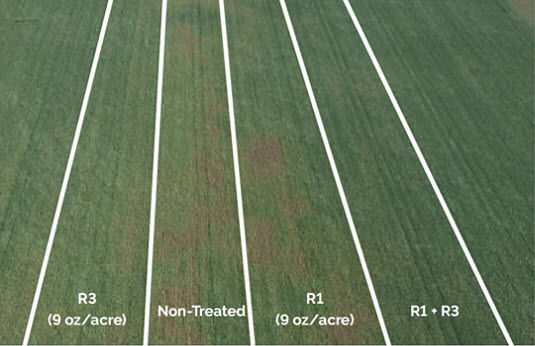 Photo of DuPont™ Aproach® on-farm fungicide research trial near Edgar, WI, 2017.