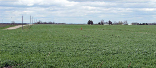 Cover crop capabilities and management requirements vary by species. The most commonly used cover crops include species of grasses, legumes and brassicas.